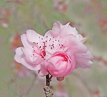 Petite Pink Blossoms by Marilyn Harris