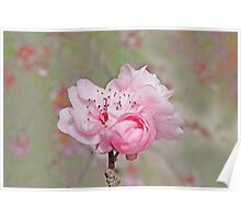 Petite Pink Blossoms Poster