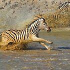 Zebra at Waterhole by Peter Bland