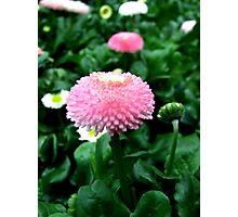 Blossom for you Photographic Print