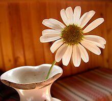 flower by Michal Šimera