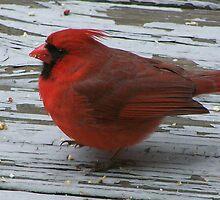 Red Bird by tserio