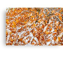 Snowfall -1 Canvas Print