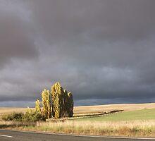 Coming Storm by Wendy Laigne-Stuart