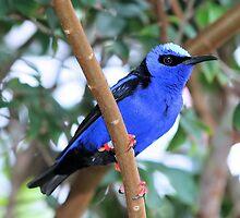 Blue Bird by craftworker