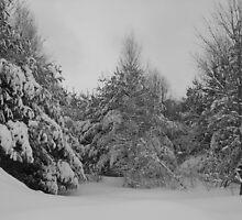 snow scape by Matte Downey