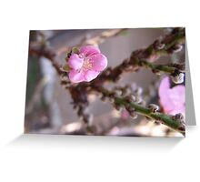"Peach trees are blooming in So. California!  ""We're in the pink"" LOVES IT! Greeting Card"