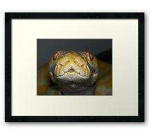 My albino python Framed Print