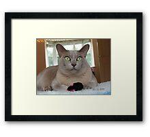More Mice Framed Print