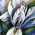 White Iris Two by rasama