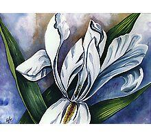 White Iris Two Photographic Print