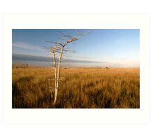 """Lone Cypress"" Art Print"