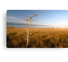 """Lone Cypress"" Canvas Print"