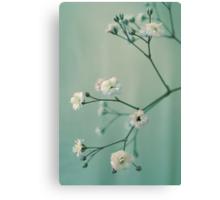Gypsophila Canvas Print