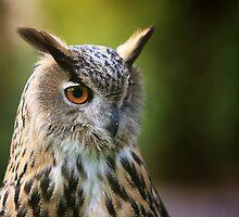 European Eagle Owl  by JamieP