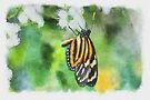 Isabella's Longwing - watercolour by PhotosByHealy