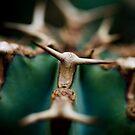 Green Bull by AquaMarina