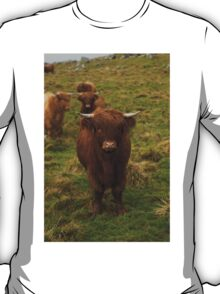 Highland cattle T-Shirt