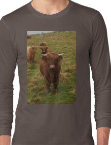 Highland cattle Long Sleeve T-Shirt