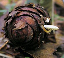 pinecone and mushroom by Lenny La Rue, IPA