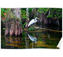 """""""An Egret's World"""" Poster"""