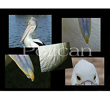 pelican! Photographic Print