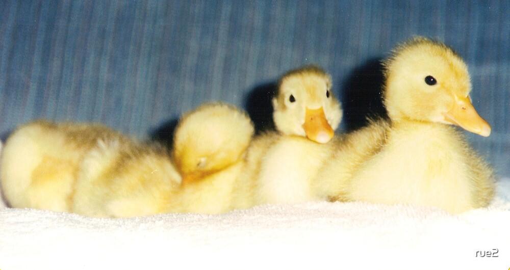 baby ducks in a row by rue2