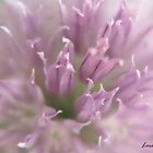 Purple Chive by Lorelle Gromus