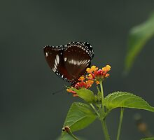 Sweet nectar by Di Edwards