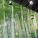 Bamboo Grove by Melanie  McQuoid