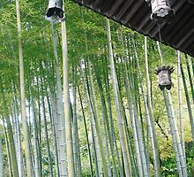 Bamboo Grove by Melanie  McQuoid