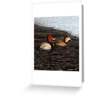Canvas Back Duck - Pair Greeting Card