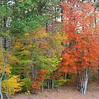 Roadside Autumn Trees by WeeZie