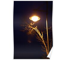 A tree and a street light at night Poster