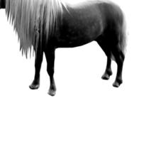 Little horse is big deal. (black) Sticker