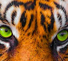 Tigers eyes by Dave  Knowles