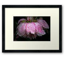 After rain Framed Print
