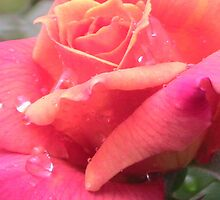 Rose and water drops by Angy