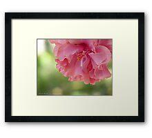 Frothy Bloom Framed Print