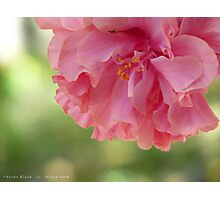 Frothy Bloom Photographic Print