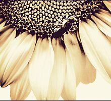 Sunflower by Louise LeGresley