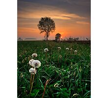Scalable Dandelions Photographic Print