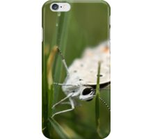 """She was asleep! :-) """"Brown-veined White butterfly"""" (Belenois aurota) iPhone Case/Skin"""