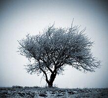 Winter Tree by Scott Bosworth