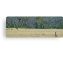 Skippy - Snowy Mountains National Park , NSW Australia Canvas Print