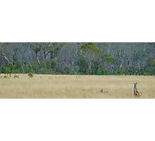 Skippy - Snowy Mountains National Park , NSW Australia Photographic Print