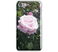 Pink Rose 1 iPhone Case/Skin