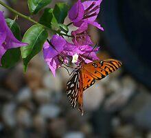 Butterfly Landing by Jim Roche