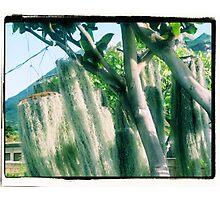 Bannon Trees Photographic Print