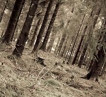 aged forest by adamfg